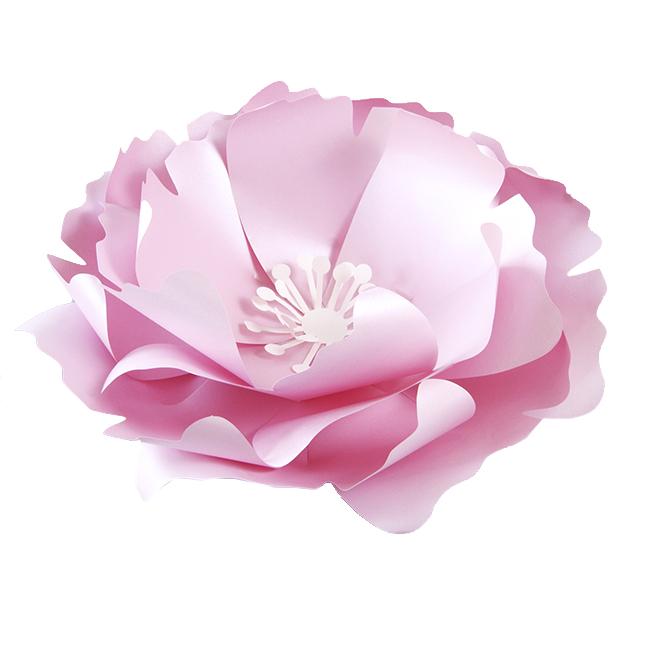 цветы картинки для оформления картинки