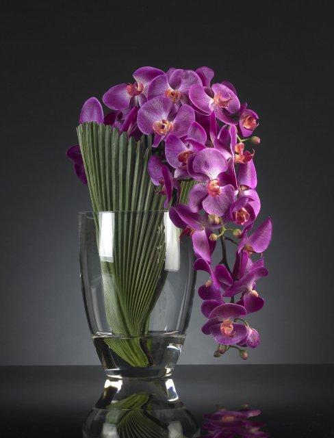 Подарочные цветы орхидея фото #1